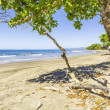 Stock Photo: Tranquil Beach