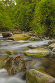 Fast Flowing Mountain Stream — Stock Photo