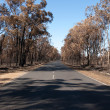 After the Bushfire — Stock Photo