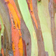 Colorful Tree Bark — Stock Photo #33287161