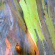Colorful Tree Bark — Stock Photo #33287171