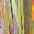 Colorful Tree Bark — Stock Photo #33287175