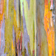 Colorful Tree Bark — Stock Photo #33287177