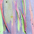 Colorful Tree Bark — Stock Photo #33287181