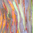Colorful Tree Bark — Stock Photo #33287193