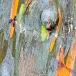 Colorful Tree Bark — Stock Photo #33287197