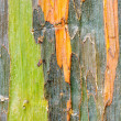 Colorful Tree Bark — Stock Photo #33287201