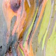 Colorful Tree Bark — Stock Photo #33287207
