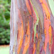 Colorful Tree Bark — Stock Photo #33287219
