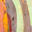 Colorful Tree Bark — Stock Photo #33287227