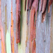Colorful Tree Bark — Stock Photo #33287241