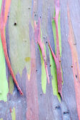 Colorful Tree Bark — Stock Photo