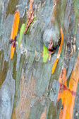 Colorful Tree Bark — Stock Photo