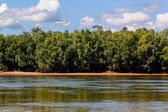 Forest next to river — Stock Photo