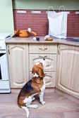 Keuken pilferers — Stockfoto