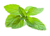Peppermint on a white background — Stock Photo