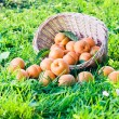 Stock Photo: Apricots in basket