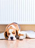Der hund in der nähe einen warmen heizkörper — Stockfoto