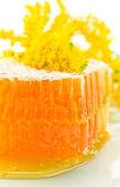Sweet honeycomb with honey — Stock Photo