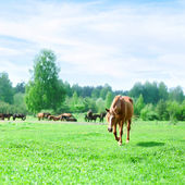 Horses on a pasture — Foto Stock