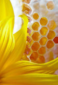 Honey and yellow flower — Stock Photo