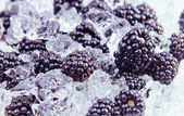 Blackberry with ice — Stock Photo