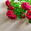 Red roses — Stock Photo #27420341