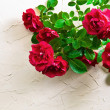 Red roses — Stock Photo #27420349