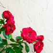 Red roses — Stock Photo #27420359