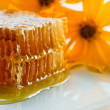 Sweet honeycomb — Stock Photo