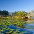 Skadar lake — Stock Photo