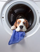 Very delicate washing — Stock Photo
