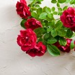 Red roses — Stock Photo #38912095
