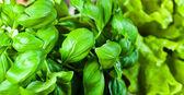 green basil and salad  — ストック写真