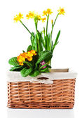 Basket with flowers isolated on white — Stock Photo
