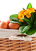 Basket with spring flowers and eggs  — Stockfoto