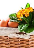 Koš s jarní květiny a vejci — Stock fotografie