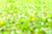 Natural summer defocused background  — Stock Photo