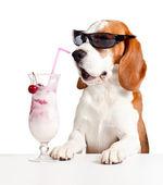 Cane carino in occhiali da sole bere cocktail — Foto Stock