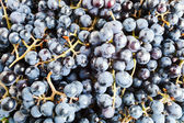 Grapes for wine manufacture — Stock Photo