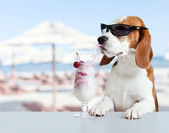 Cute dog in sunglasses drink cocktail — Stock Photo