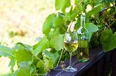 White wine in vineyard — Stock Photo