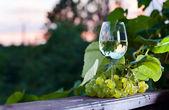 Green grape and white wine in vineyard — Stock Photo