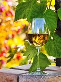 белое вино в винограднике — Стоковое фото