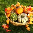 Pumpkins  in the grass — Stock Photo