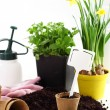 Flowers for planting — Stock Photo