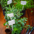 Stock Photo: Herbs for planting