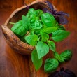 Different basil sorts — Stock Photo