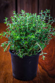 Marjoram in flower pot — Stock Photo