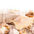 Background with seashells and treasure chest — Stock Photo